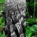 jungleville5