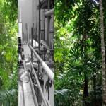 jungleville6
