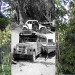 jungleville11